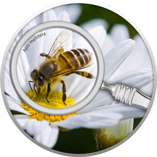 Sudraba Monēta - Slepenais dārzs - Medus bite 17,50 g, 999